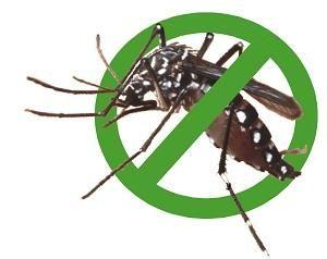 Dịch vụ diệt muỗi, phun muỗi hiệu quả