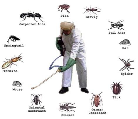 Kết quả hình ảnh cho dịch vụ diệt côn trùng